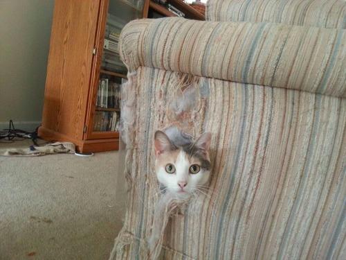 Coucou, j'ai nettoyé l'intérieur du canapé !
