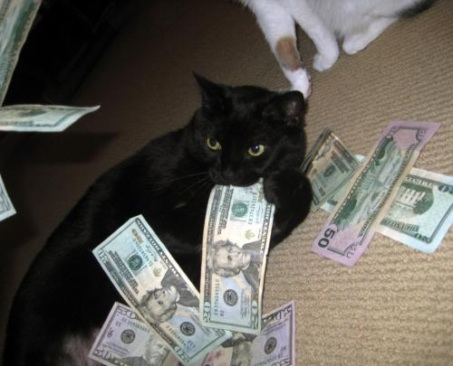 chat gouffre à argent