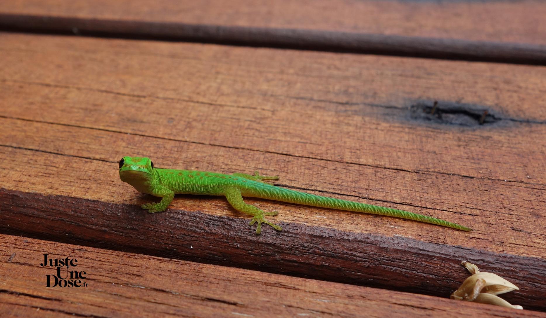 seychelles-ile-silhouette-gecko